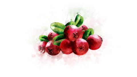 Animated illustration of Cranberry 영상물