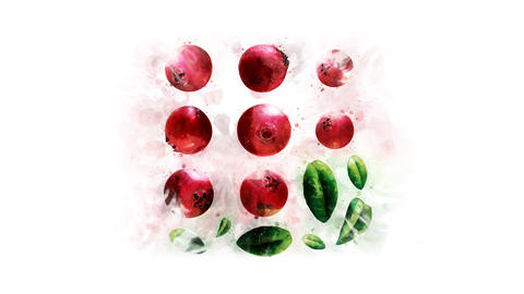 Cranberry painted in watercolor Animation