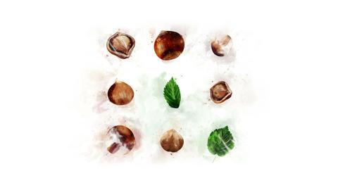 Animation of Hazelnut for decoration Animation