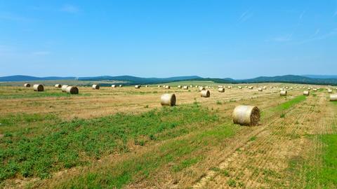 Hay rolls on wheat field in late summer フォト
