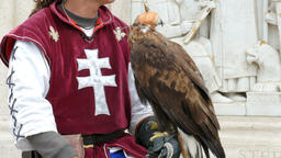 Man in medieval outfit and a bird of prey in a cap. Falconry Live Action