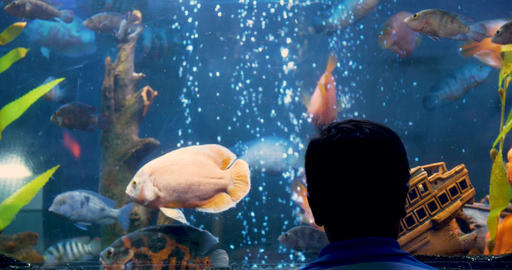 The boy's head against a large aquarium with fish Footage