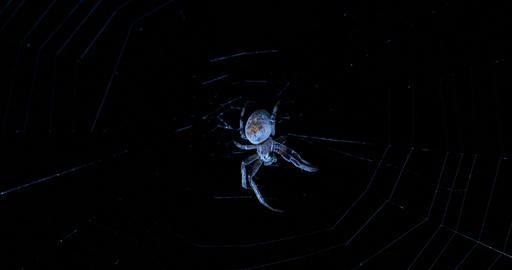 Spider networks night Footage