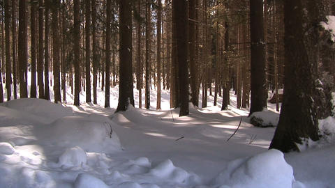 00006 Winter001 wald Stock Video Footage