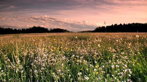 00011 Natur Blumen2 Stock Video Footage