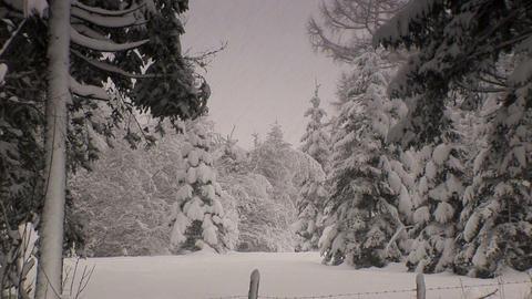 00013 Winter003 Schneefall2 Stock Video Footage