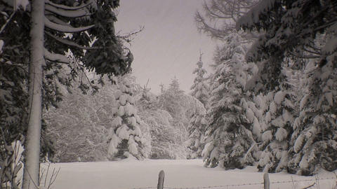 00013 Winter003 Schneefall2 Stock Video Footage