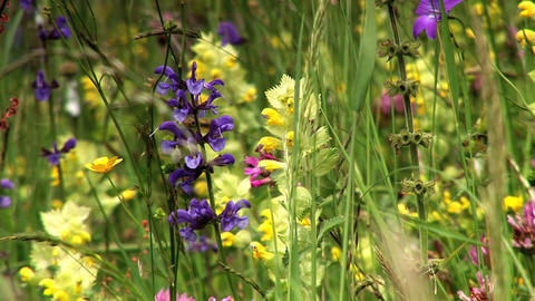 00023 Natur Blumen3 Stock Video Footage