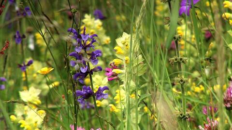 00023 Natur Blumen3 Footage