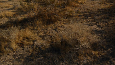 DesertFloor1 Footage