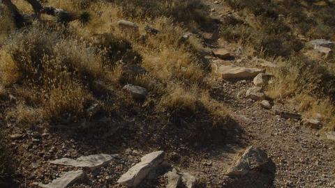 DesertFloor3 Stock Video Footage