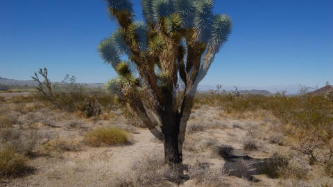 DesertFloor5 Stock Video Footage