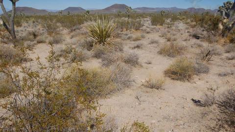 DesertFloor5 Footage