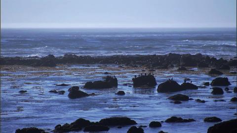 Ocean Rocks Birds 1 Stock Video Footage