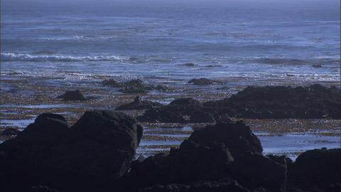 Ocean Rocks Seaweed 1 Stock Video Footage