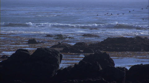 Ocean Rocks Seaweed 1 Stock Video Footage