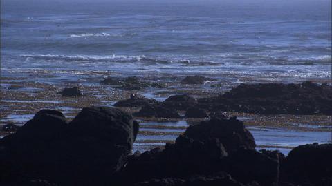 Ocean Rocks Seaweed 1 Footage