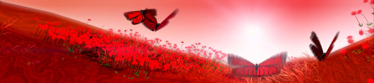 Butterfly Landscape Stock Video Footage