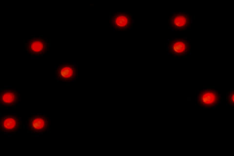 LED 05 (L) FF Animation