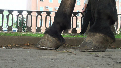 Horse's hooves Stock Video Footage