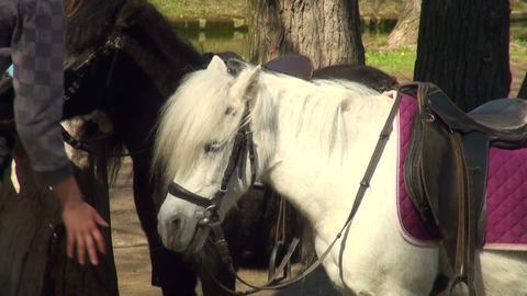 Pony Stock Video Footage