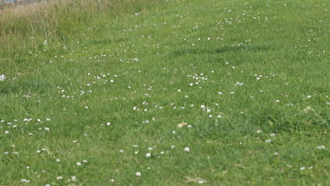 English coast in early summer Stock Video Footage
