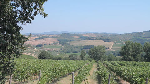 Tuscan countryside and vines of Chianti Stock Video Footage
