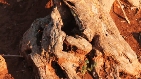 Red clay earth and detail of a tree trunk Footage