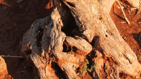 Red clay earth and detail of a tree trunk Stock Video Footage