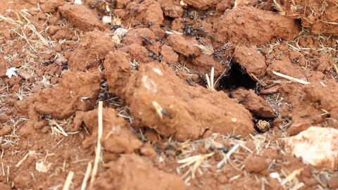 Detail of the anthill entrance with working ants Stock Video Footage