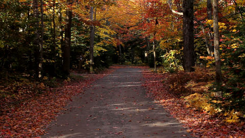 Narrow road in Killarney Provincial Park Footage