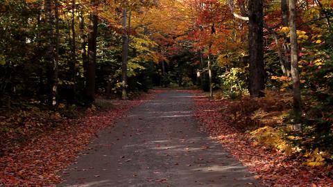 Narrow road in Killarney Provincial Park Stock Video Footage