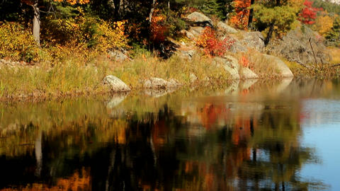 Early autumn trees reflecting on calm water Stock Video Footage