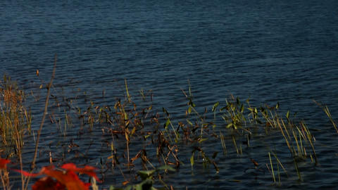 Foliage landscape with lake Stock Video Footage