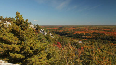 Autumn forest landscape Stock Video Footage