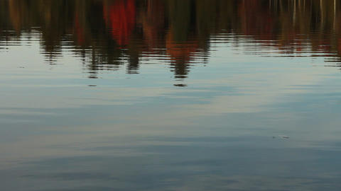 Autumn trees reflecting on calm lake Stock Video Footage