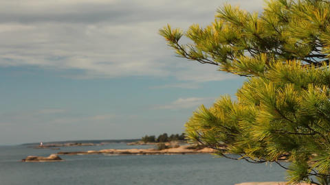Wind moving pine needles, with view of Georgian Ba Stock Video Footage