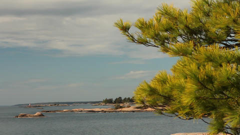 Wind Moving Pine Needles, With View Of Georgian Ba stock footage