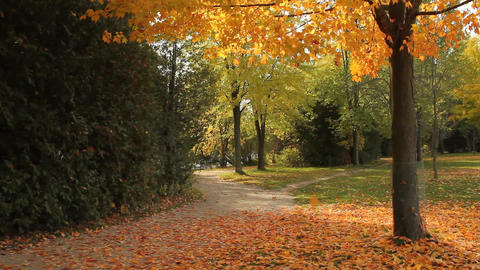 Leaves falling from a tree Stock Video Footage