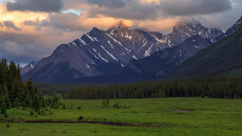 Timelapse of a moose cow and calf in Kananaskis, in the Canadian Rocky Footage