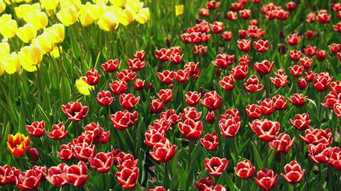 Stunning spring landscape Footage