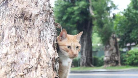 CAT Stock Video Footage