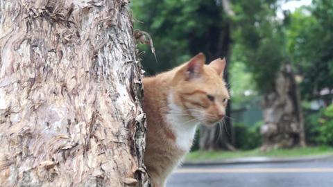CAT Live Action