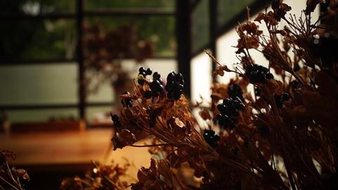 Dry flower Footage