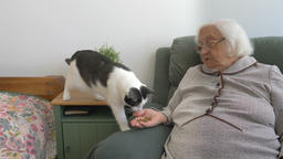 Old woman is giving dry cat food for her cat Footage
