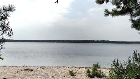 Paradise on the shore of the lake view through the pines Footage