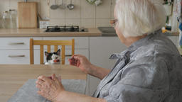 Curious cat is checking what an old lady is eating. Old woman and her friend Live Action