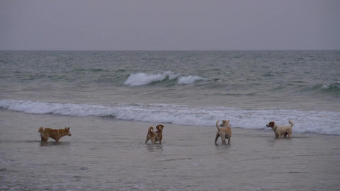 Dogs are swimming and playing in the sea SLOW MOTION Footage