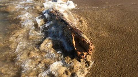 Drift peace of wood in sea waves on sand beach Footage