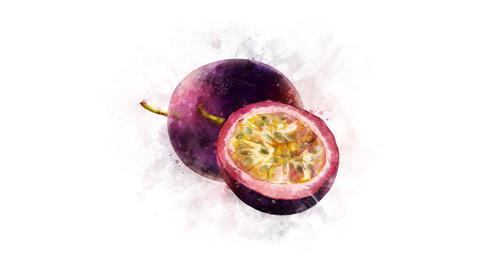 Animation of watercolor drawing of Passionfruit Animation